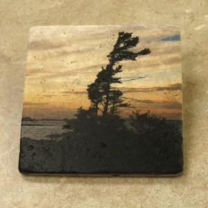 Art On Stone - Windswept Pine