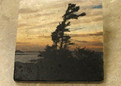 Art on Stone – Windswept Pine